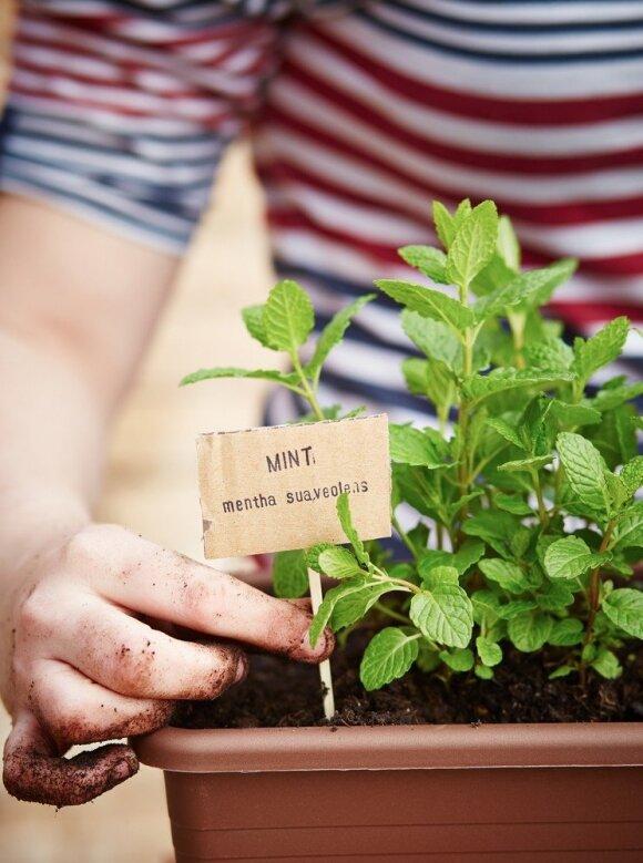 5 pamiršti augalai, kurie gali išgyventi (beveik) visiškai tamsioje patalpoje