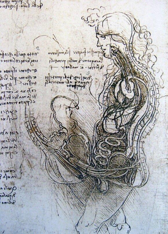 Da Vinči anatomijos iliustracijos