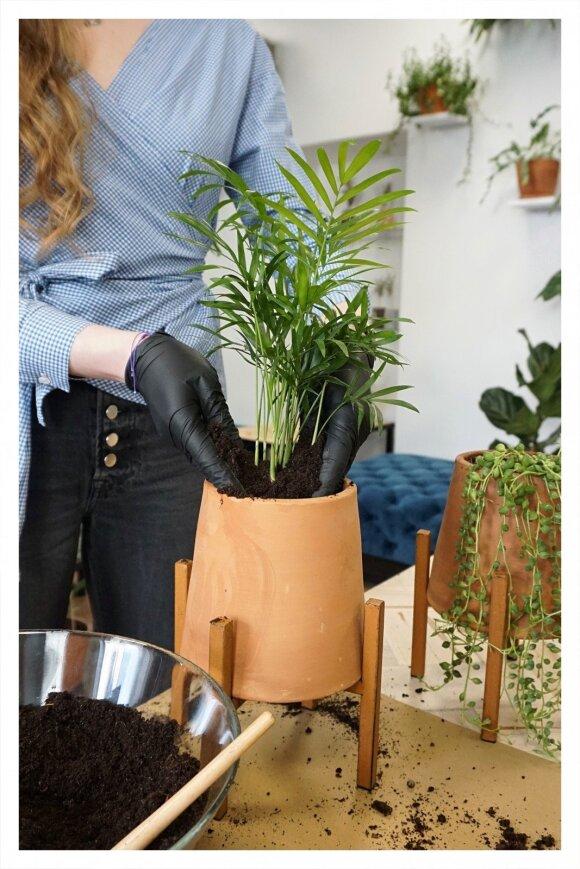 Dovilė Narbutaitė persodina gėles