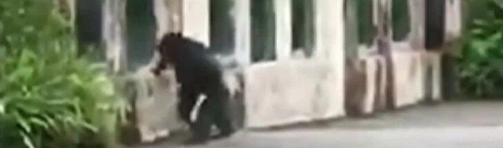 Taivane iš aptvaro pasprukusi beždžionė išgąsdino lankytojus