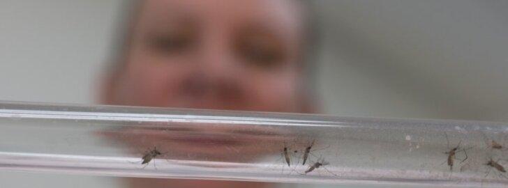 Singapūre Zikos virusu yra užsikrėtęs 41 žmogus