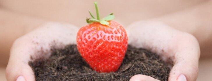 """Ką būtina nuveikti sode, darže ir gėlyne <span style=""""color: #ff0000;"""">birželio mėnesį</span>"""