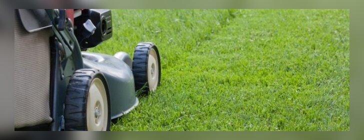 Kaip po žiemos atgaivinti ir atnaujinti savo veją?