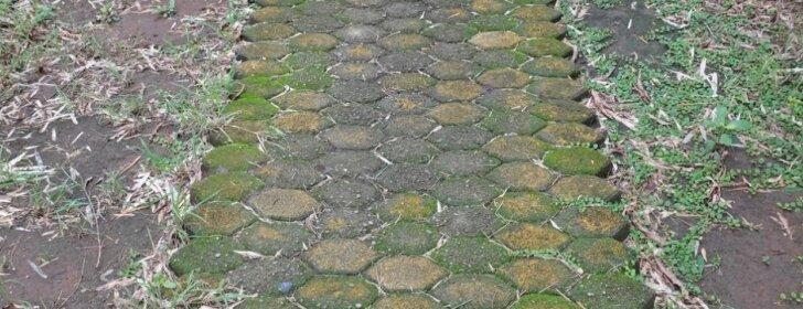 Samanos plytelių tarpuose ir jų naikinimo būdai