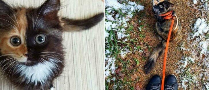 """Gamtos žaidimai nustebins: """"dviveidė"""" katytė žavi aplinkinius"""