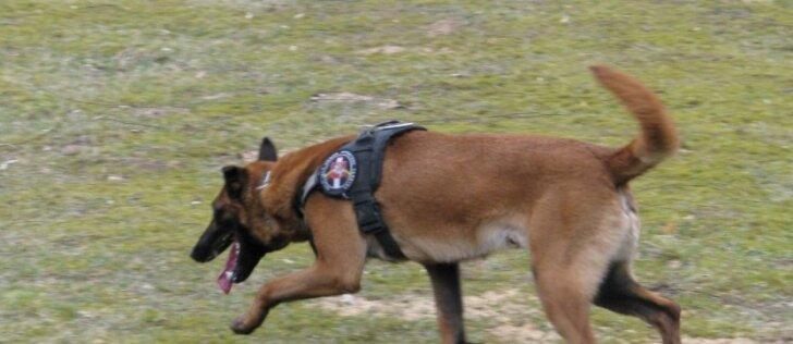 Šuns Ramzio bylos nagrinėjimas: A. Komskiui – dar sunkesni kaltinimai