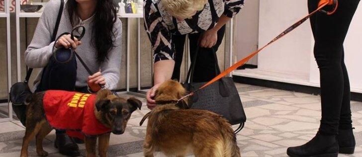 Pinigai už parduotus dailės kūrinius atiteks gyvūnų klinikos įkūrimui