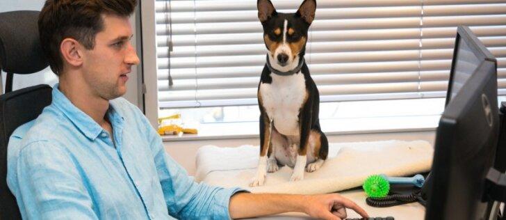 Kosmetikos gamintojai dirba kitaip: su trimis šunimis ir katinu