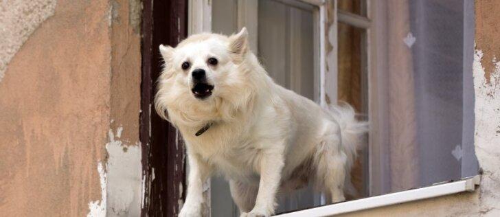 Seime pasiūlytas būdas užtildyti šunis kelia šeimininkų baimę: kaip iš tiesų reikėtų elgtis