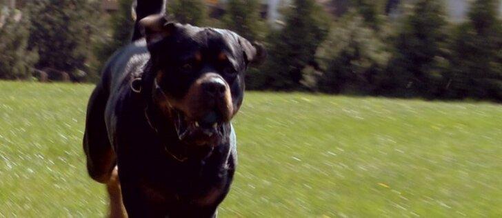 4 - oji dresūros pamoka: kaip elgtis, kad šuo visada reaguotų į savo vardą?