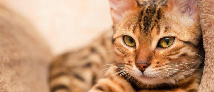 Faktai apie kates, kurių tikriausiai nežinojote
