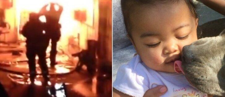 Per plauką nuo nelaimės: moterį su kūdikiu nuo gaisro išgelbėjo pitbulė
