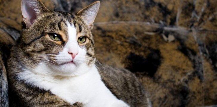 Įžūlus katinas