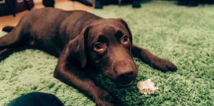 """Šunų elgsenos ekspertas pataria: kaip <span style=""""color: #c00000;"""">nuraminti šunį atėjus svečiams</span> ir pripratinti jį prie narvo"""