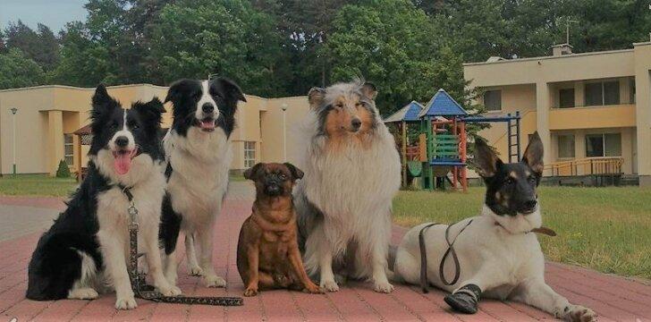 Kaniterapijai šunys specialiai parengiami ir testuojami.