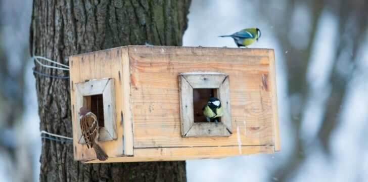 8 idėjos, kuo lesinti žiemoti likusius paukščius