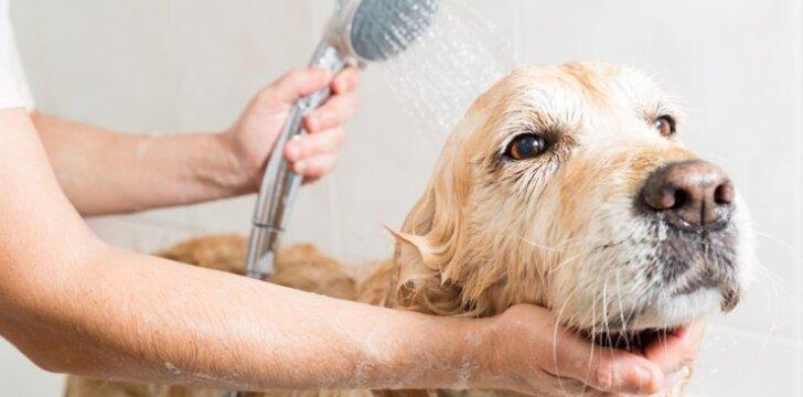 Šuns maudymas
