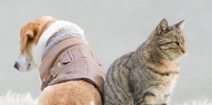 Katė ir šuo