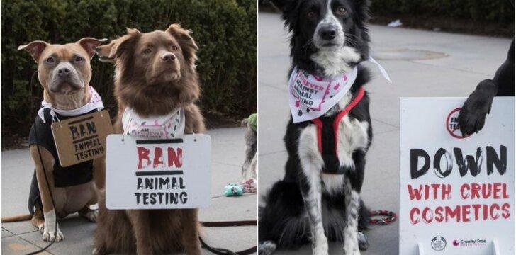 Protestas prieš bandymus su gyvūnais kosmetikoje
