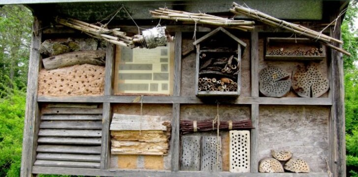 Vabzdžių namelis – ar tai reikalinga?