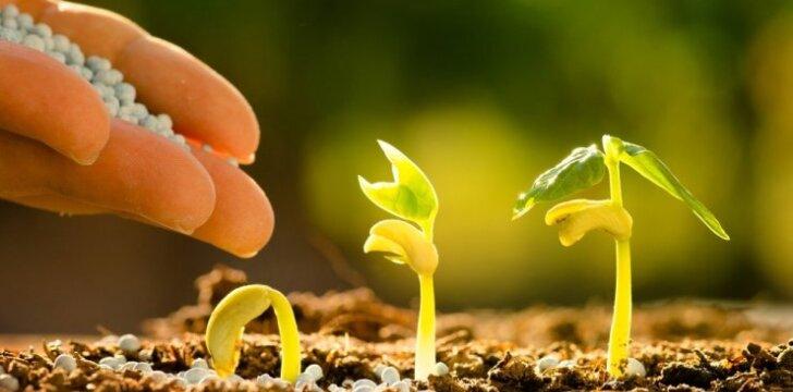 Pataria profesionalai: kaip išsirinkti sėklas