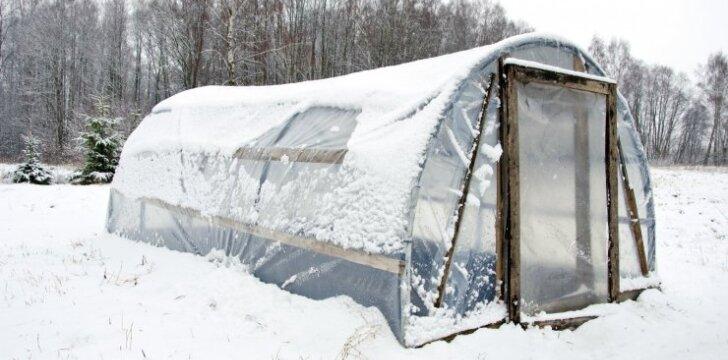 Kaip paprastai paruošti šiltnamį žiemai ir pavasariui
