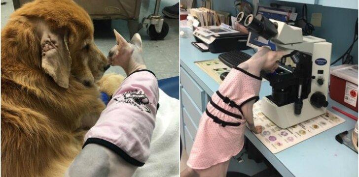 """Katė """"įsidarbino"""" veterinarijos klinikoje"""