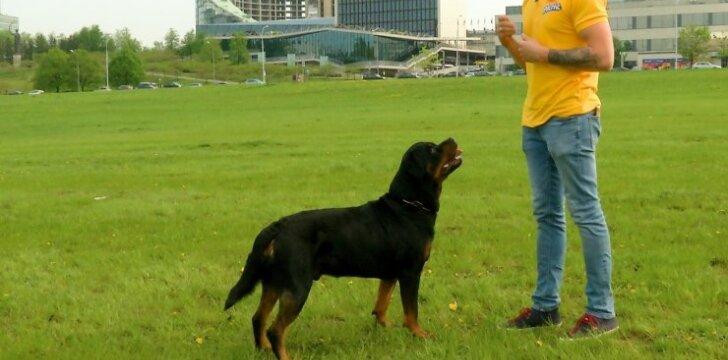 1 - oji dresūros pamoka: kaip motyvuoti savo šunį atlikti komandas?