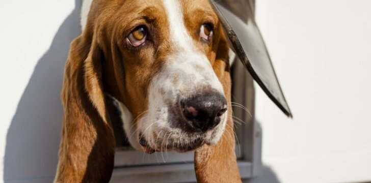 10 protingiausių šunų veislių, kurias lengviausia dresuoti