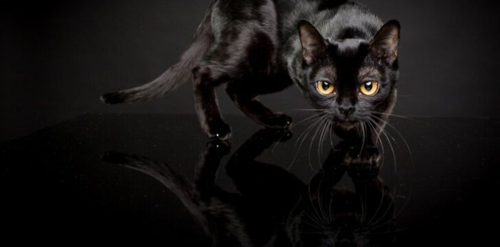 Bombėjaus katė