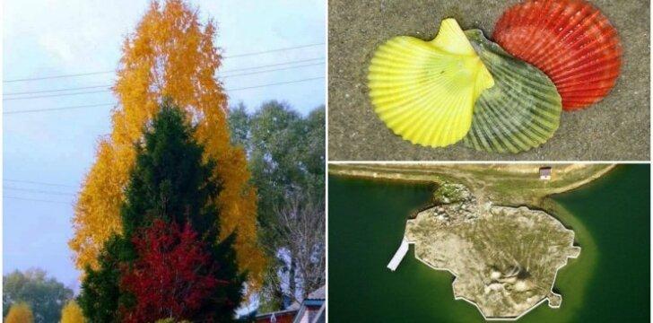 Lietuvos spalvos nuotraukose