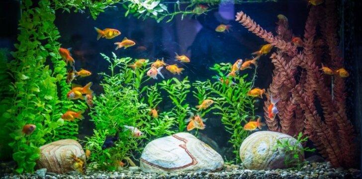 Didelis akvariumas namuose - lengviau nei gali pasirodyti