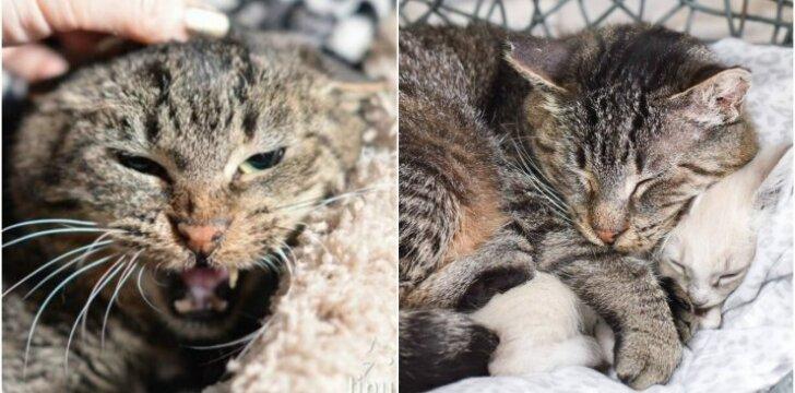Laukinis katinas pasikeitė susipažinęs su kačiukais