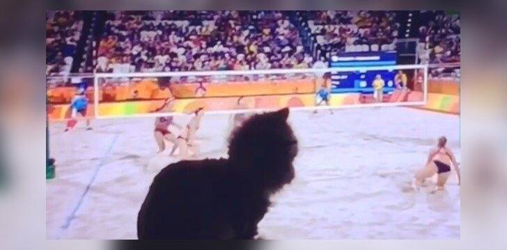 Olimpines žaidynes žiūrinti katytė panoro pažaisti kartu
