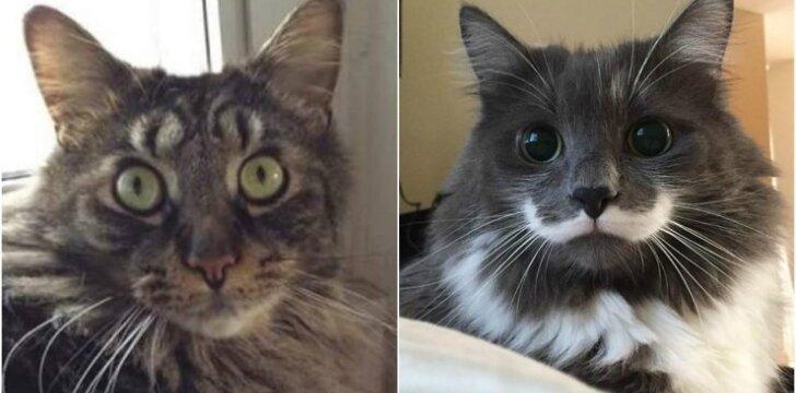 Katės su neįprastomis dėmėmis