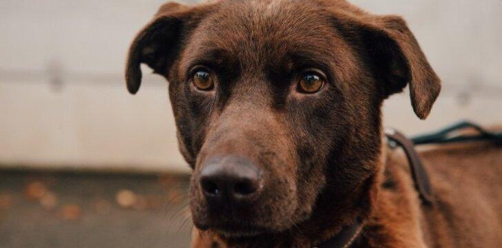 Namų ieškantis šuo