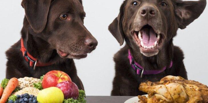 Šunų mityba
