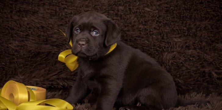 Šuo geltonu kaspinu