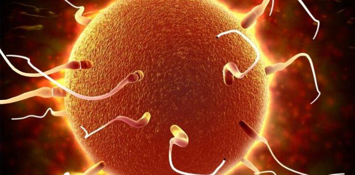 Kaip namų sąlygomis patikrinti spermos kokybę