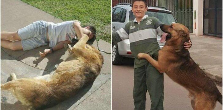 Dingęs šuo sugrįžo pas berniuką