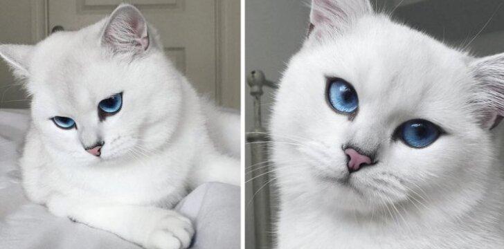 Katė, turinti bene gražiausias pasaulyje akis