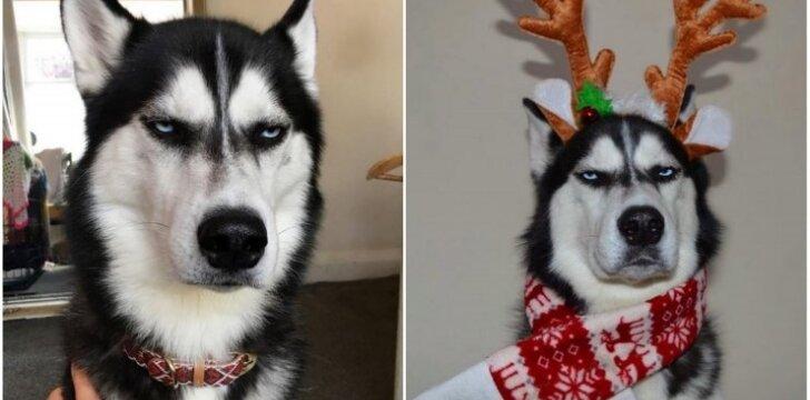 Šuo, kuris nemėgsta Kalėdų