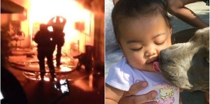 Pitbulė išgelbėjo šeimą nuo gaisro