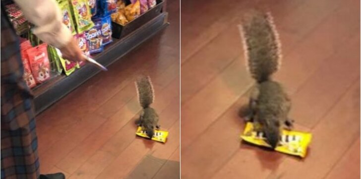 Vagiliaujanti voverė