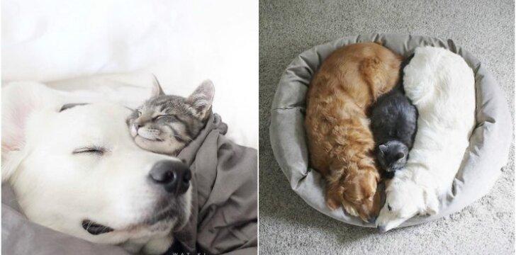 Trijų gyvūnų draugystė