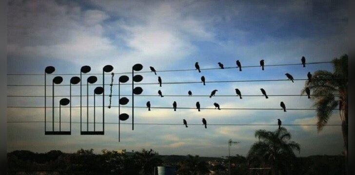 Paukščių kuriama muzika