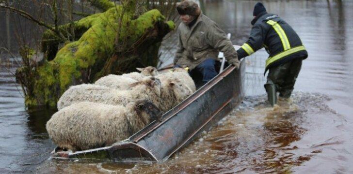 Avių gelbėjimo operacija Šilutėje, pernykščių potvynių metu