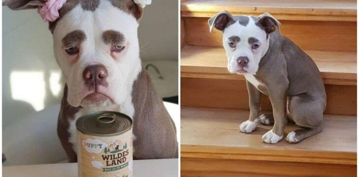 Liūdniausias pasaulyje šuo