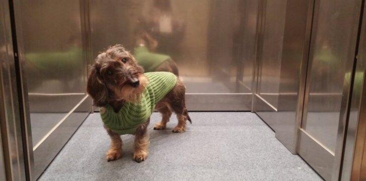 Šuo lifte