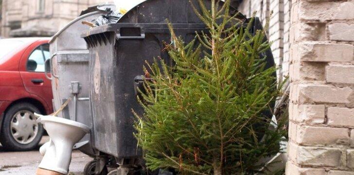 Nemėtykite žaliaskarių šalia daugiabučių, negrūskite į buitinių atliekų konteinerius - didžiuosiuose miestuose jos surenkamos tam, kad būtų panaudotos biokurui arba miškų ūkiui